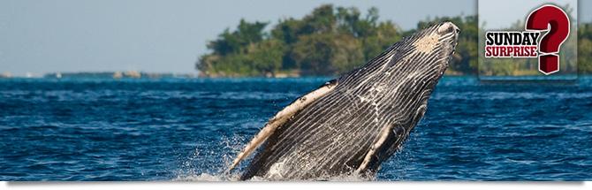 baleines de Nosy Be