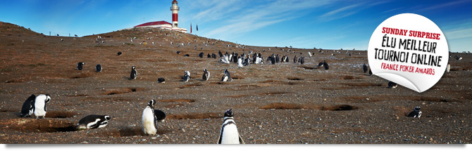 The penguins of Chile