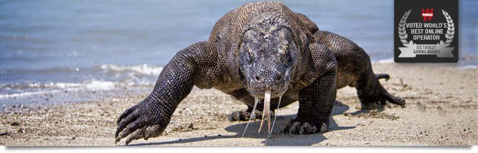 The Komodo dragons of Bali
