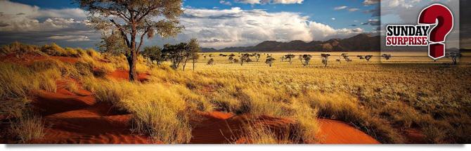 Safari, Namibie