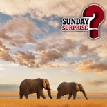 Sunday Surprise: South Africa on the back of an elephant