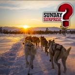 Sunday Surprise Dans avec les loups