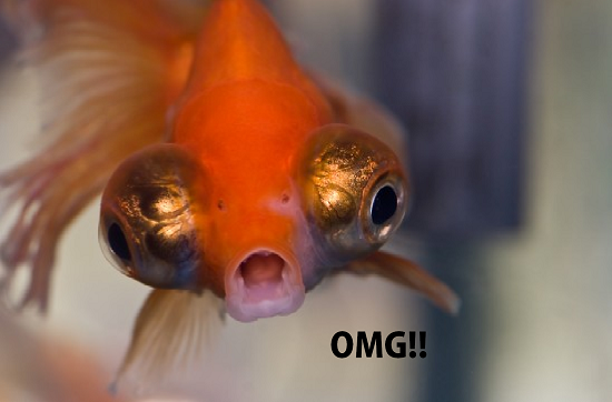Surprised Fish