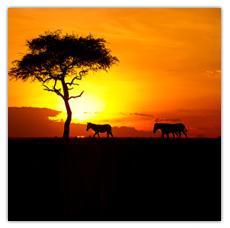 Sunday Surprise, de l'exceptionnel tous les dimanches! - Page 2 Africa-2